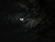 26th Oct 2018 - Hunter's Moon
