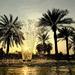 Lake park, Abu Dhabi by stefanotrezzi