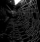 19th Oct 2018 - The dark web