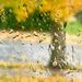 Sunny tree by jernst1779