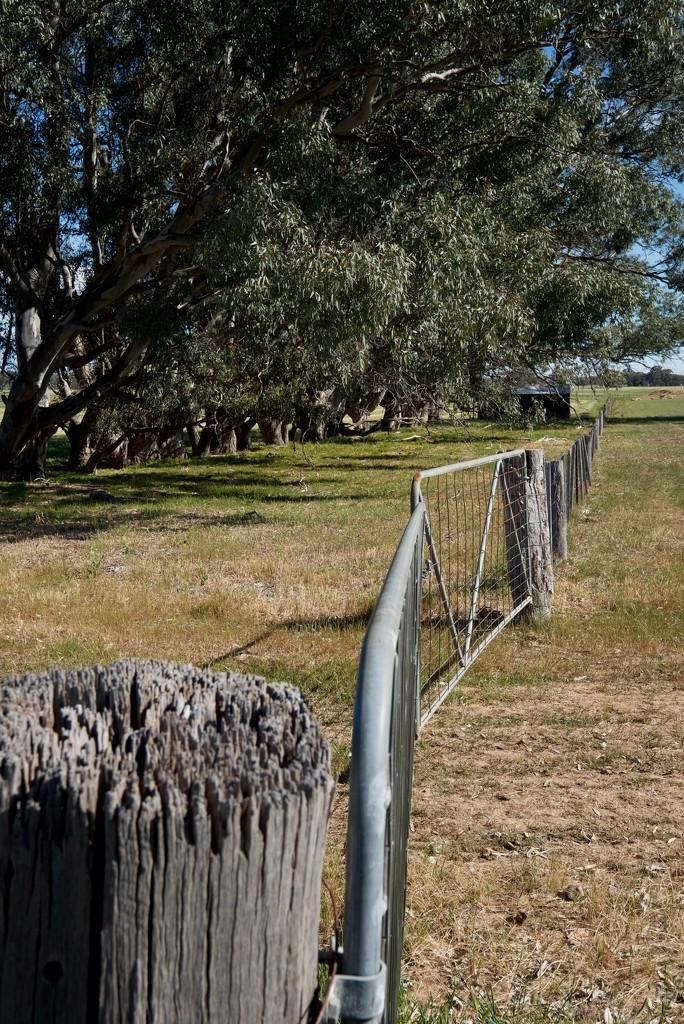 The fence by golftragic