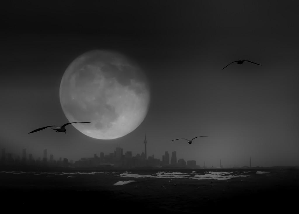 bad moon rising by northy
