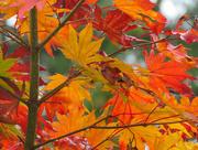 28th Oct 2018 - True Autumn Colors