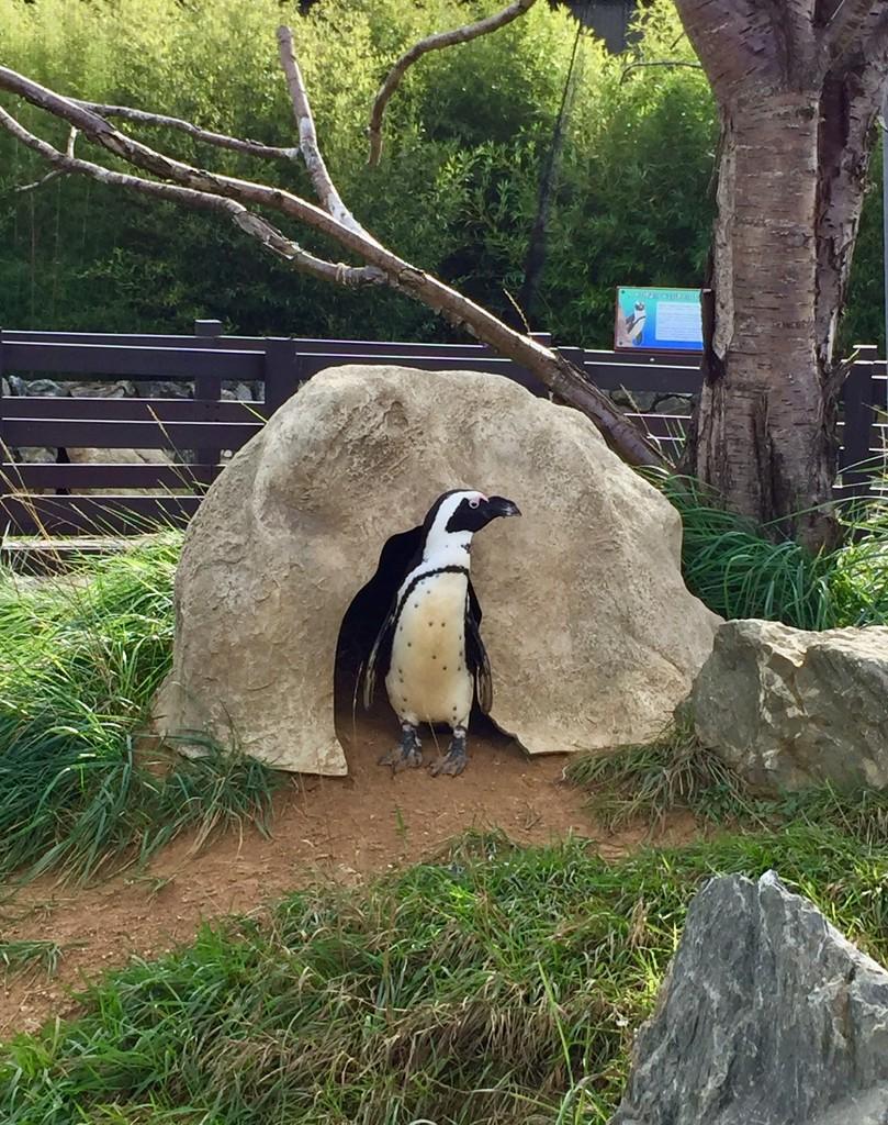 Penguin by gillian1912