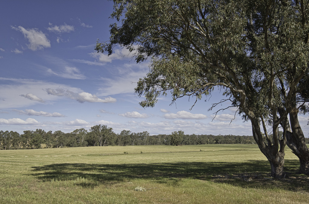 Down the paddock by golftragic