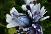 29th Oct 2018 - Flowers