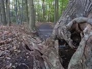 29th Oct 2018 - Fallen tree