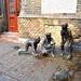 Paul Street Boys by kork