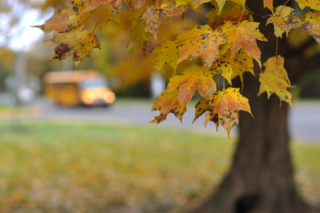 Fall 4 by loweygrace