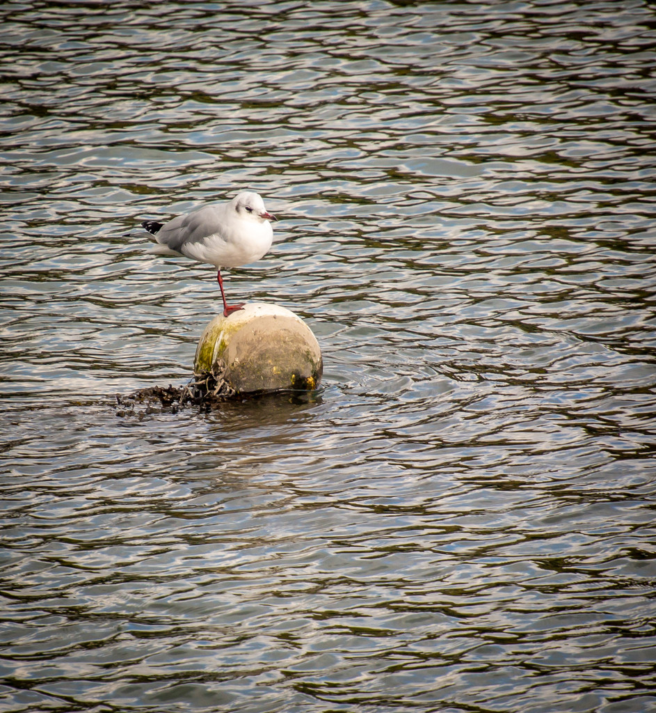 Just a simple buoy meets gull story..... by swillinbillyflynn
