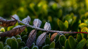 29th Oct 2018 - First frost