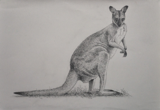 Wallaby by jeneurell