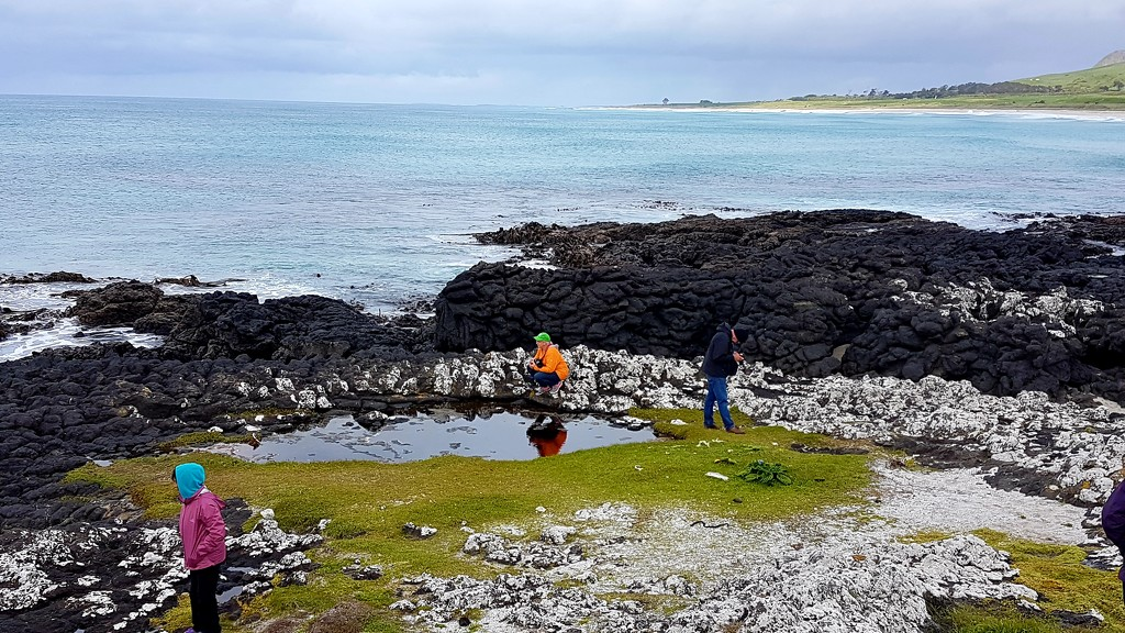 Chatham Island .. Splatter Rock.. by julzmaioro