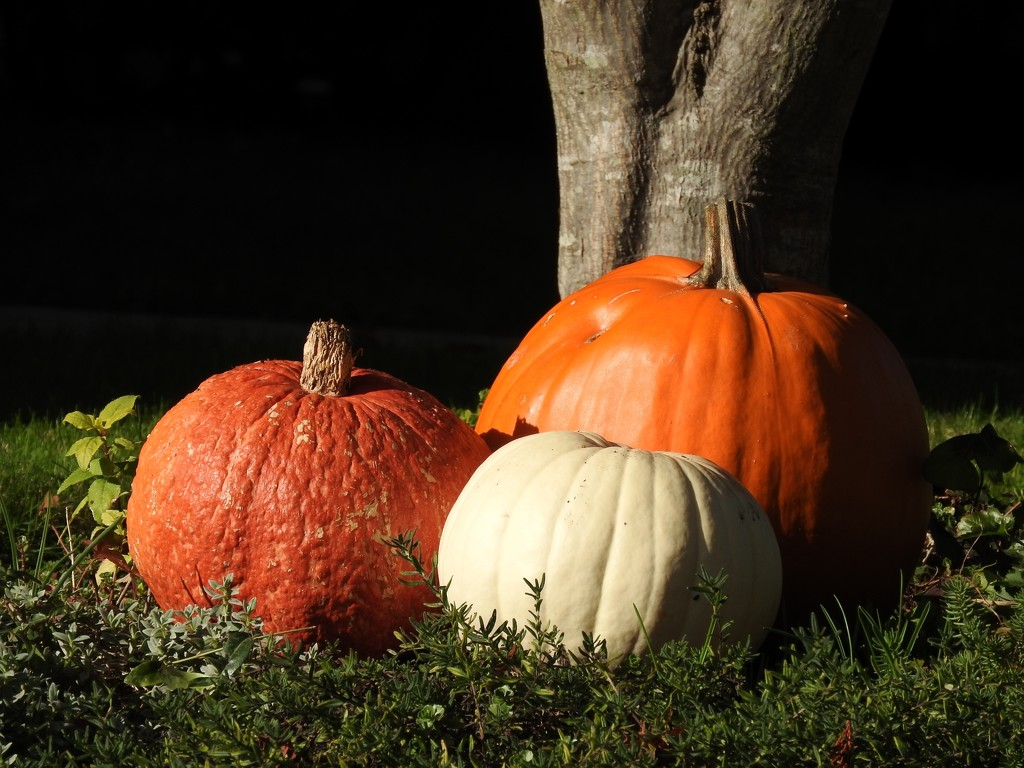 Three Pumpkins by seattlite