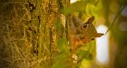 28th Oct 2018 - Peek-a-Boo Squirrel!