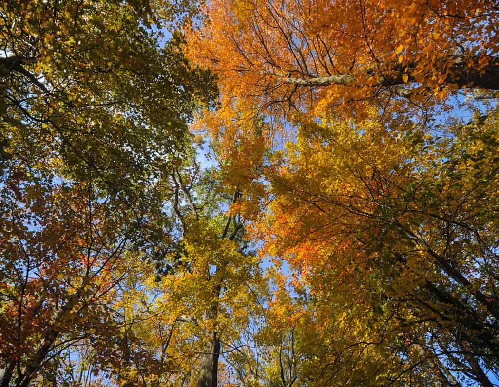 Fall 5 by loweygrace