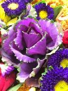 30th Oct 2018 - Purple Cabbage Rose?
