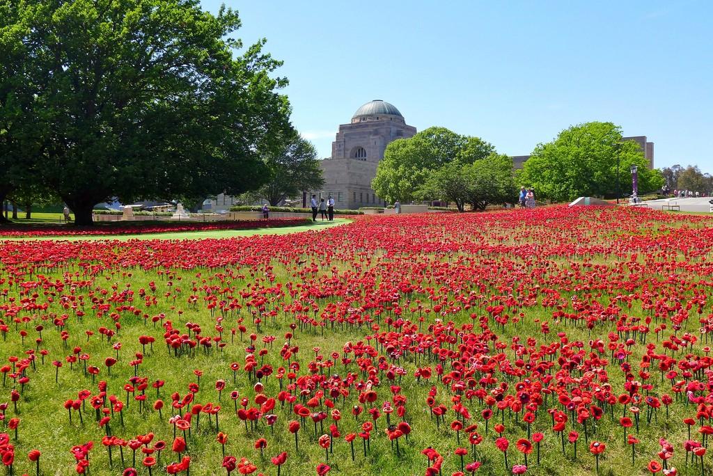 62,000 Poppies by leggzy