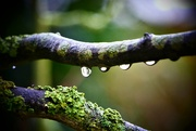 1st Nov 2018 - Droplets in a Row