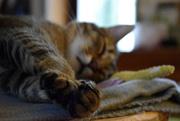1st Nov 2018 - focus on paws
