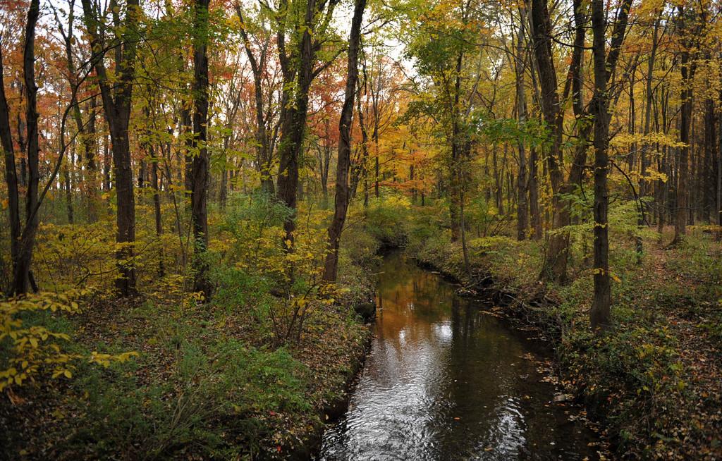 The Brook by loweygrace