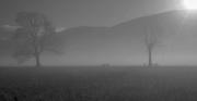 2nd Nov 2018 - Morning Mists
