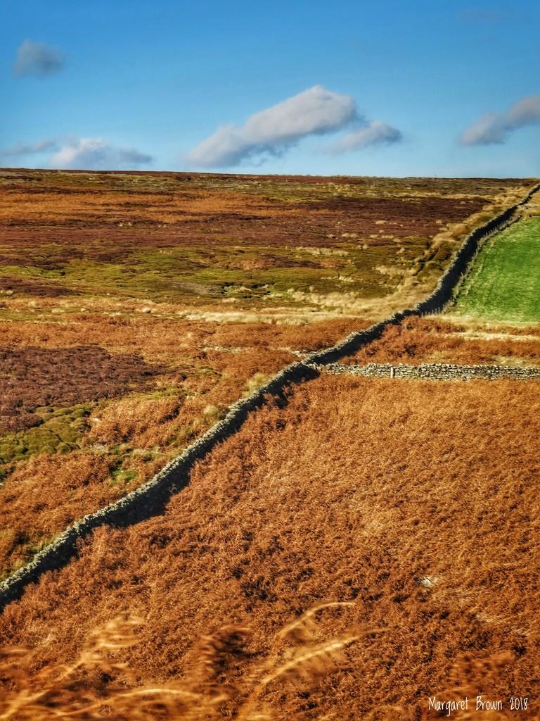 Pitt Moor by craftymeg