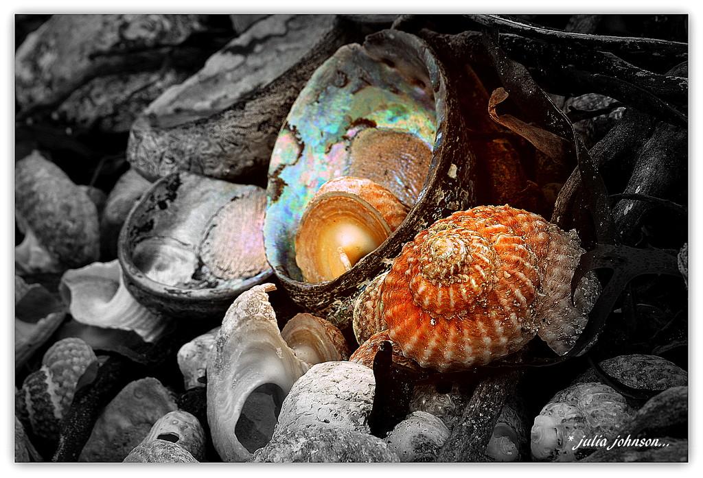 Treasures of the Sea... by julzmaioro