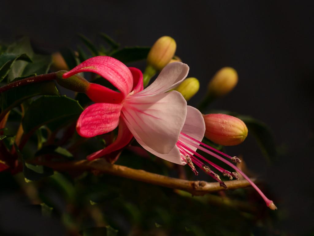 Beauty by gosia