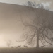 Sheep in the mist by ellida