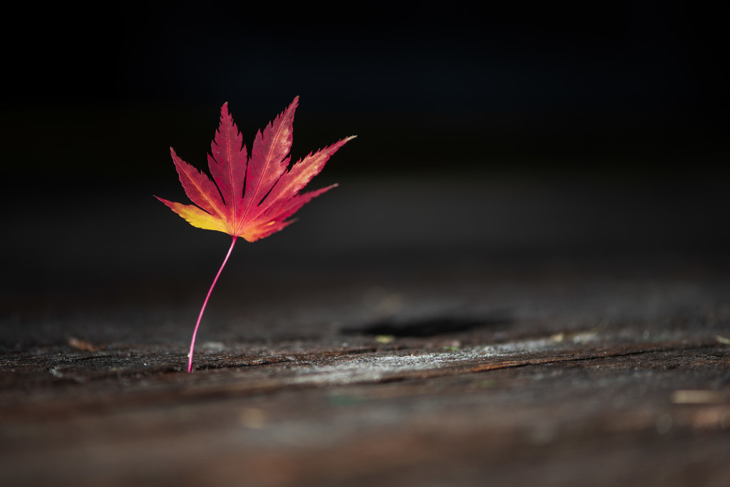 Same Leaf as Yesterday by kwind