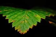 3rd Nov 2018 - Leaf Macro