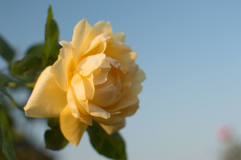 Yellow by blueace