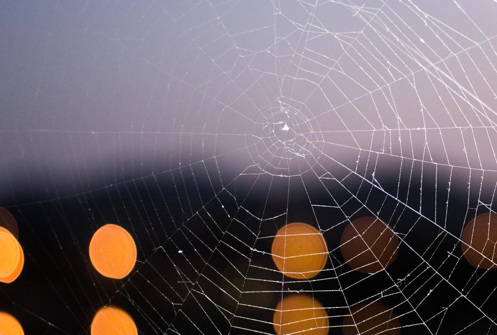 Cobweb by blueace