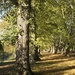 Dappled in Autumn by helenhall