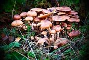 4th Nov 2018 - Mushroom City