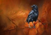 4th Nov 2018 - Autumnal Crow