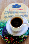 8th Oct 2018 - Kopi Luwak