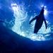 Penguins-Detroit Zoo