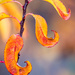 An autumn by haskar