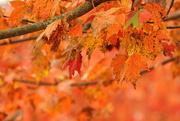2nd Nov 2018 - Autumn leaves