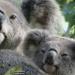 do I look like my mum? by koalagardens