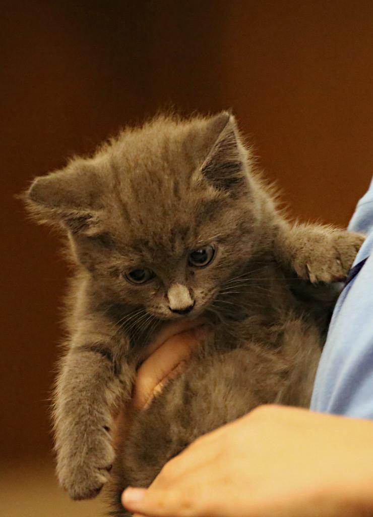 Little Kitty by gq