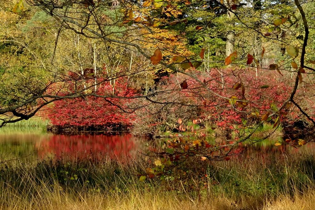 red reflection by gijsje