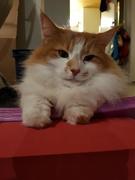 6th Nov 2018 - Yoga cat