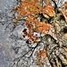 Maple  by lynnz