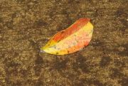 6th Nov 2018 - Lone leaf in a water