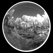 7th Nov 2018 - Fisheye Infrared