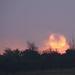 Fiery sunrise by shepherdman