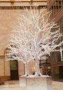 7th Nov 2018 - Silver Trees